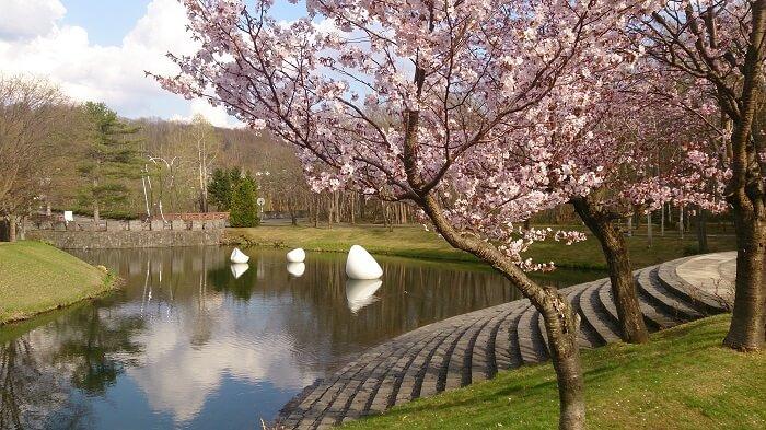 芸術の森の桜