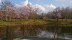 芸術の森美術館にある池